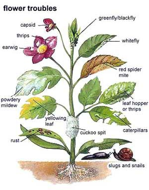 Common garden pests and disease that are easily treatable.