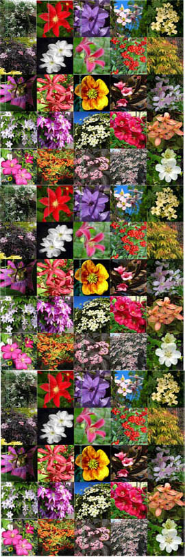 2+PLANT+PRODUCT+PROMOTION+%2D+Choose+your+own+2+Climbing+Plants+or+Shrubs+or+a+mixture+of+both+%2D+Pick+%27n%27+Mix