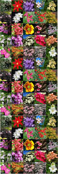 8 PLANT PROMOTION- Choose your own 8 Established Climbing Plants - Pick 'n' Mix