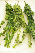 Artificial Small Leaf Ivy Trailing Plants - Multibuy 3 trailers in 3 assorted leaf details -  70 CM Length & with 400+ Assorted Sized Ivy Leaves