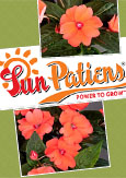 SunPatiens® Compact Coral X 5 Jumbo Plug Plants. DELIVERY - MAY ONWARDS