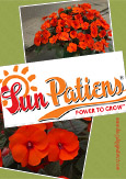 SunPatiens® Hot Coral X 5 Jumbo Plug Plants. DELIVERY - MAY ONWARDS